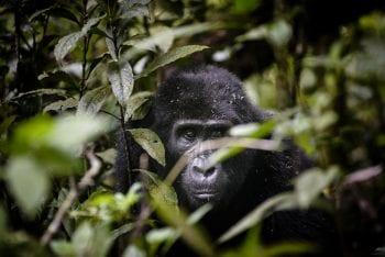 Kenya + Uganda Experience